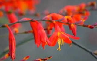 Цветы, цветущие зимой: названия и фото растений на подоконнике