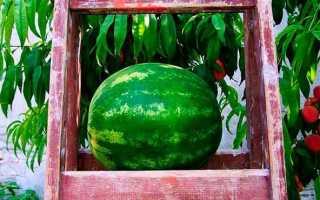 Ягода арбуз: выращивание из семян, фото, посев на рассаду и в открытый грунт, уход