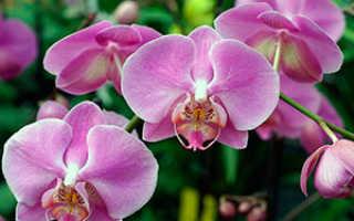 Как ухаживать за Орхидеями в букете правильно