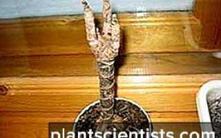 Почему болеют цветы – симптомы и лечение болезней листьев растений