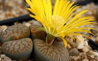 Группы растений: луковичные, бромелиевые, кактусы и суккуленты