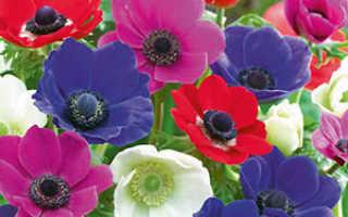 Клубневые цветы с названиями и фото – комнатные и садовые растения