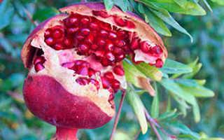 Экзотические плодовые растения для дома